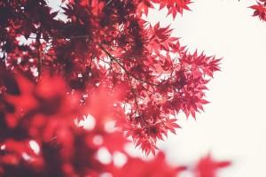 ventajas de viajar en otoño