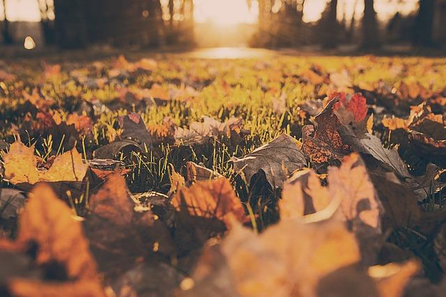 Madrid en otoño Parque El Capricho